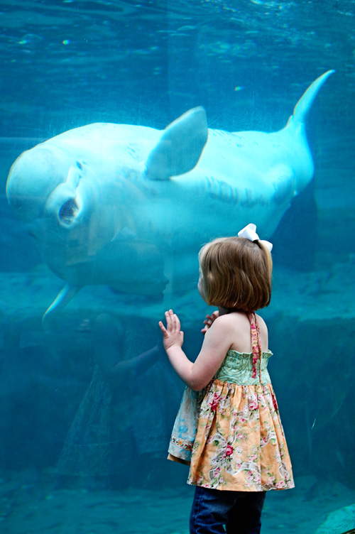 MJ-beluga whale copy